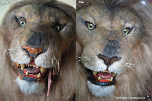 Lifesized Lion Statue Movie Prop Repair