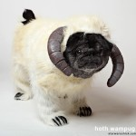 Chubbs the Hoth Wampug Famous Internet Dog
