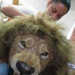 lion mane for puppet head