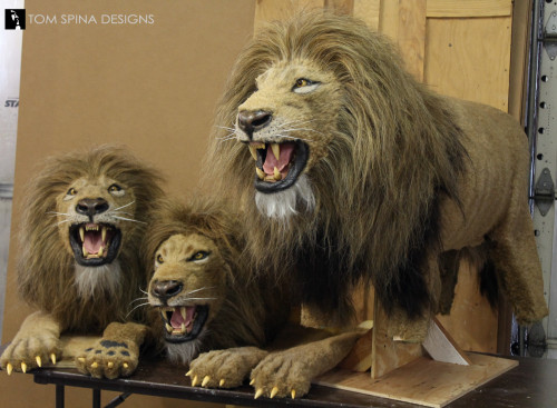 realistic lion puppets and costumes